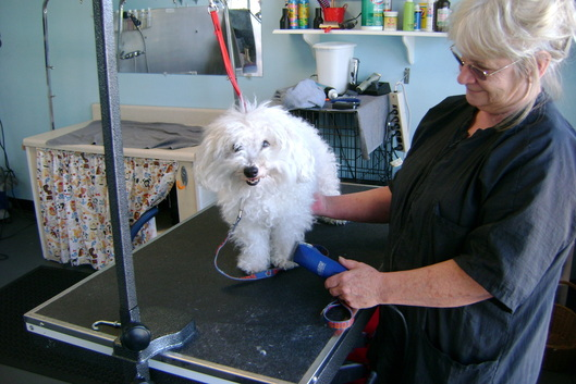 Photo gallery prefurred pet wash and grooming clover says no bath todayease solutioingenieria Image collections